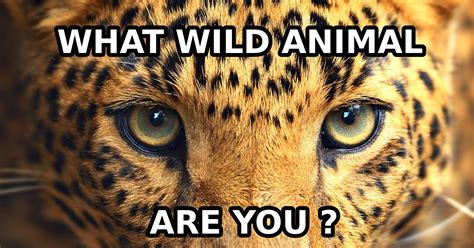 What Kind of Wild Animal Are You? - Quiz - Quizony